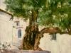 El árbol de Xaouen (Marruecos)